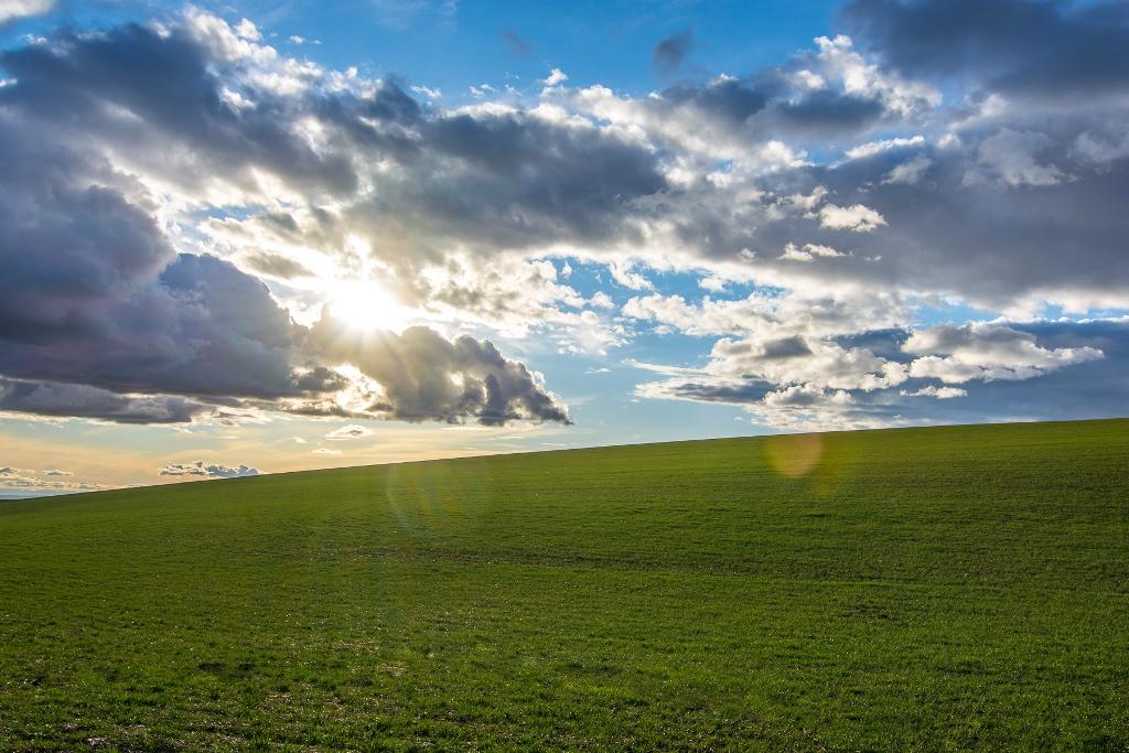 Winter Wheat Field - Walla Walla